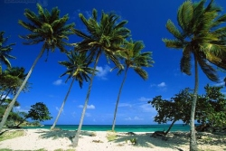 Тур в Доминикану в марте