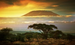 Поиск туров в Танзанию